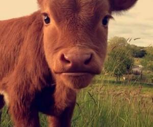 adorable, animal, and Awe image