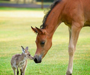 animal, horse, and cute image