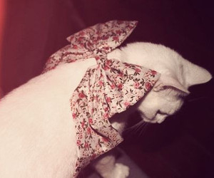 cat, cute, and bow image