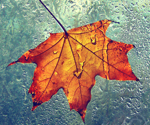 autumn, landscape, and leaf image