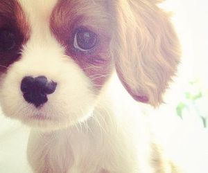 animals, fluffy, and puppy image