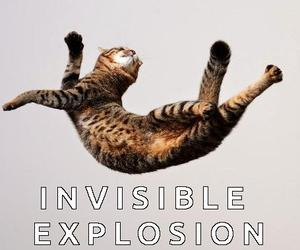 funny cats, cat meme, and invisible cat image