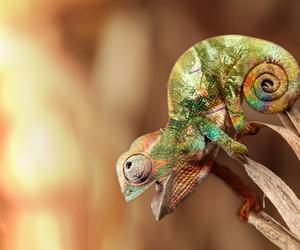 animal and chameleon image
