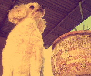 dog, summer, and white image
