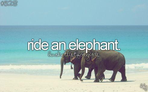elephant, ride, and bucket list image