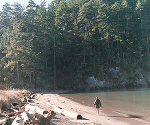 water, beach, and forest image