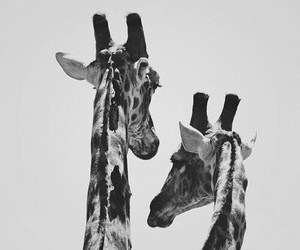 Animales, blackandwhite, and nature image