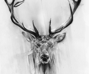 deer, drawing, and animal image