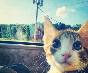 cat, beautiful, and kitty image