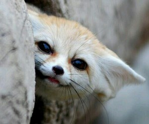 fox, lovely, and photography image