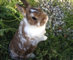 animal, brown, and bunny image