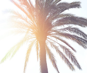 palm trees, summer, and sun image