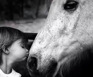 horse, kiss, and black and white image