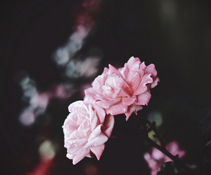 pretty, vintage, and flowers image