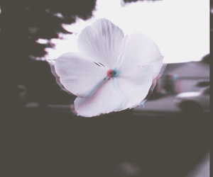 blackandwhite, flower, and grunge image