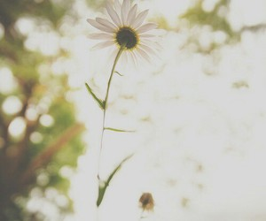 daisies, dreamy, and flowers image