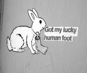 bunny, rabbit, and human image