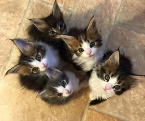 kitten, cat, and animal image