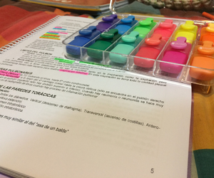 anatomy, colors, and highlighter image