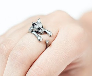ring, cat, and kitty image