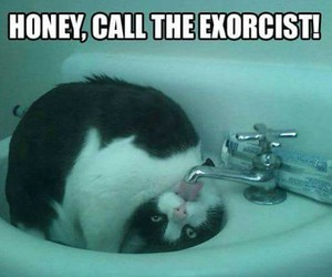 cat, exorcist, and funny image