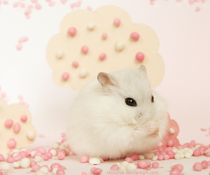 beautiful, pretty, and hamster image