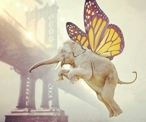 butterfly and elephant image