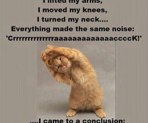 funny, cat, and old image
