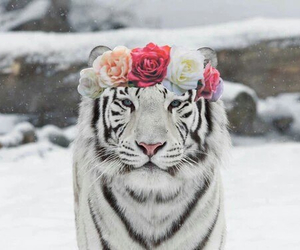 flowers, animal, and snow image