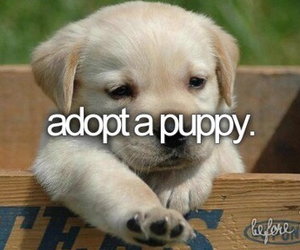 puppy, adopt, and before i die image