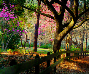 flowers, forest, and amazing image
