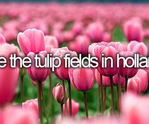 holland, quote, and tulips image