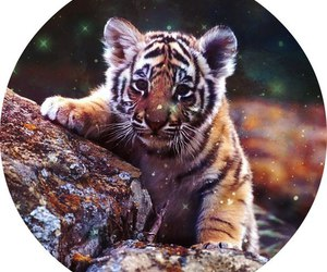 animal, sweet, and tiger image