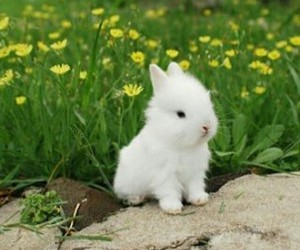 cute, white, and bunny image