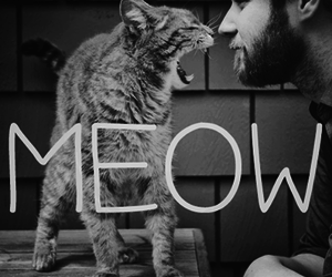 cat, meow, and boy image