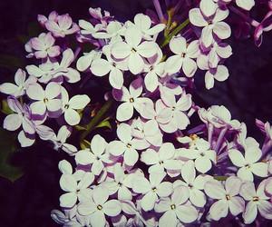 blumen, fiori, and verde image