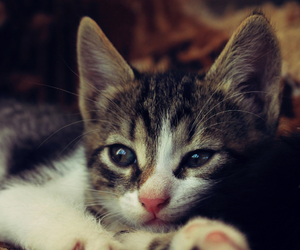 cat, hunter, and kitten image