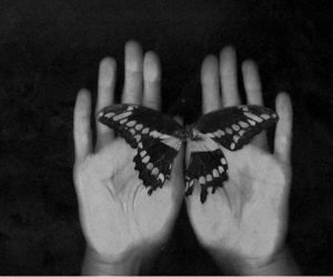 butterfly, black and white, and hands image