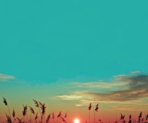 blue, sunset, and wheat image