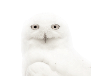 awesome, owl, and white image