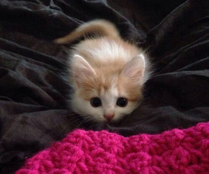 kitten, orange and white, and cute image