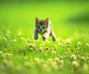 flowers, cute, and run image