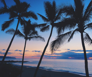 palm trees, summer, and love image