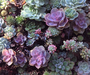 plants, nature, and flowers image