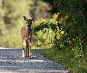 animal, bambi, and deer image
