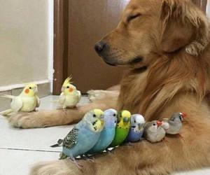 dog, bird, and animal image
