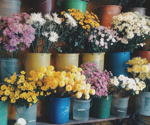 flowers, colorful, and summer image
