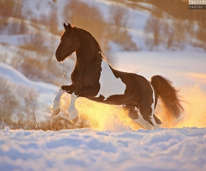 black, horse, and tobiano image