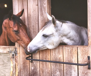 horse, brown, and pony image