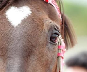 equine, heart, and horse image